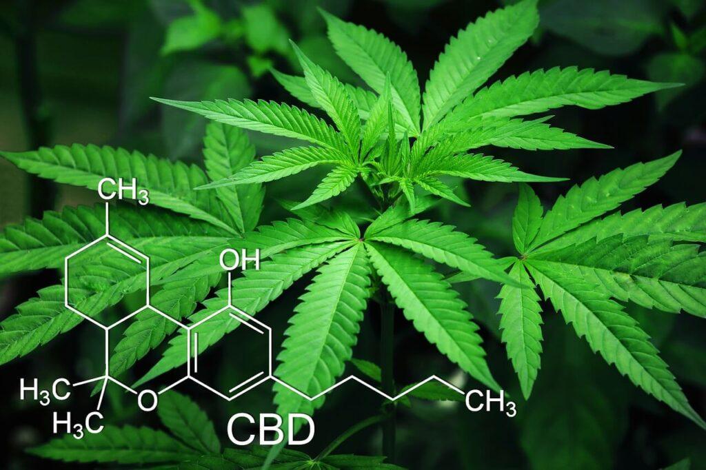 CBD tartalmú marihuána